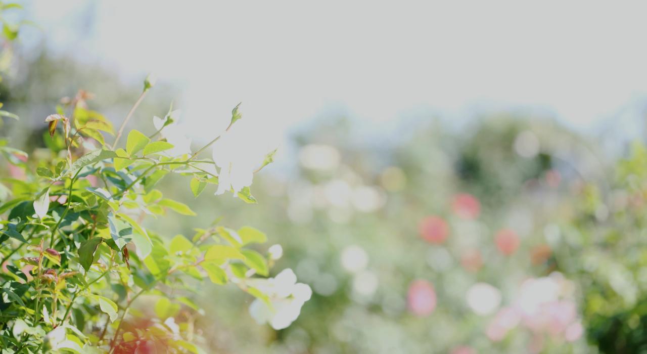 株式会社LAKAイメージ画像(花)