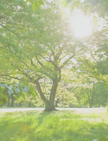 株式会社LAKAイメージ画像(森林)
